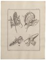 Homo sapiens - binnenoor - 1700-1880 - Print - Iconographia Zoologica - Special Collections University of Amsterdam - UBA01 IZ19600071.tif