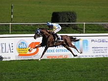 Canter and gallop - Wikipedia