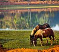 Horses make every landscape look beautiful!.jpg