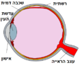 Human eye cross section detached retina He Transcript.png