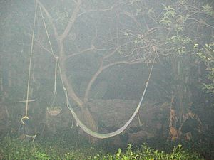 Fog created by fumigating agent for mosquito c...