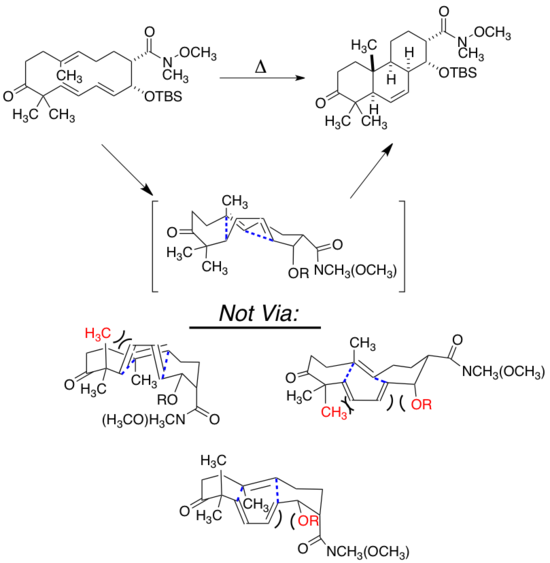 IMDA Macrocycles.png