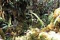 IMG 5086 elfin forest (8247527043).jpg