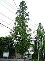 Ichijo high-school Nara.jpg