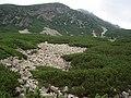 """Im Tatras - oben ,Gelb Felsspitze"""""""" - panoramio.jpg"""