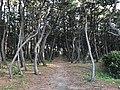 Imazu Pine Grove 19.jpg