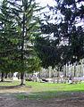 In Town Park.jpg