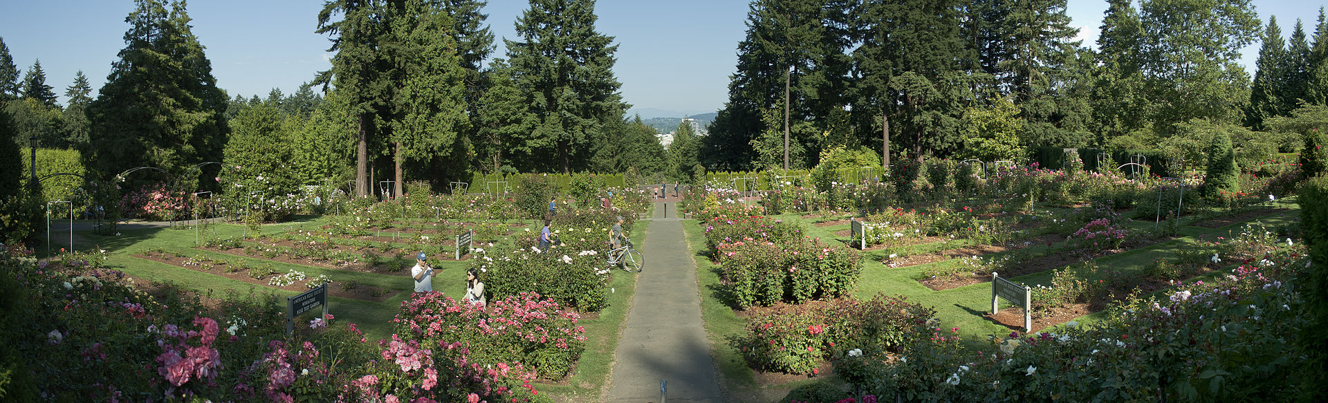 Rent a bicycle and ride to the Rose Garden