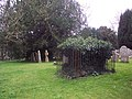 Ivy covered tomb at St Thomas a Becket Church, Tilshead - geograph.org.uk - 373256.jpg