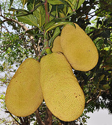 Jackfruit of Bangladesh2.jpg