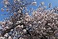 Jardin des Plantes @ Paris (32892008723).jpg