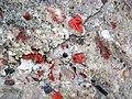 Jasper-quartz pebble conglomerate (Lorrain Formation, Paleoproterozoic, ~2.3 Ga; Ottertail Lake Northeast roadcut, near Bruce Mines, Ontario, Canada) 29 (47709313791).jpg
