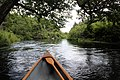 Jessup River in Aug 2020 from a canoe.jpg