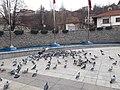 Kızılcahamam pigeons 2.jpg