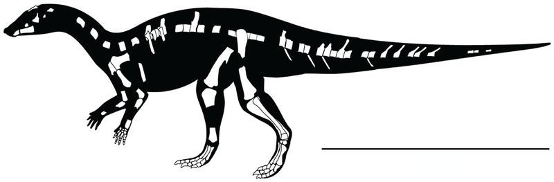 File:Kaiparowits ornithopod.png