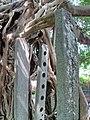 Kam Tin Tree House - 2007-09-30 13h59m52s SN200790.jpg