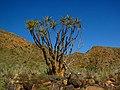 Karas Region, Namibia - panoramio (15).jpg