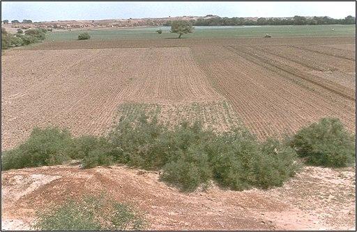 Khadin system of runoff farming