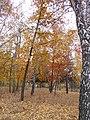 Khimselyshche, Cherkasy, Cherkas'ka oblast, Ukraine - panoramio (243).jpg