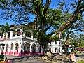 King Edward VII School Taiping Old Big Tree.jpg