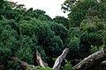 Kirstenbosch-023.jpg