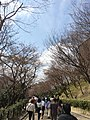 Kiyomizu 1-chome, Higashiyama Ward, Kyoto, Kyoto Prefecture 605-0862, Japan - panoramio (3).jpg