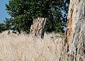 Knudshoved Odde - panoramio (37).jpg
