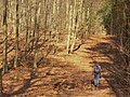 Koenigswald - Forstweg (Forest Track) - geo.hlipp.de - 34709.jpg