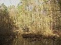 Koenigswald - Pfuhl (Woodland Pool) - geo.hlipp.de - 34712.jpg