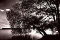 Kontrast Baum an der Havel.jpg