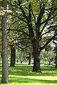 Kremlin gardens. - panoramio.jpg