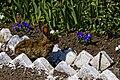 Krolik w ogrodzie.jpg