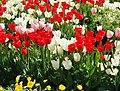 Kukkiahelsinkikesäsuomi57214757417515559215.JPG