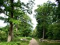 L'Isle-Adam (95), route de Stors.jpg