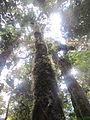 La Amistad Panama Biosphere Reserve - Parque Nacional Volcan Baru (a core zone) 15.JPG