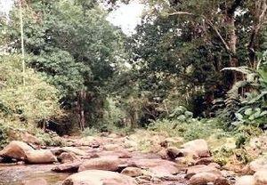 Henri Pittier National Park - River Ocumare at level of La Trilla.