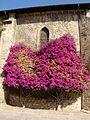 La buganvilla de la basilica (42789012).jpg