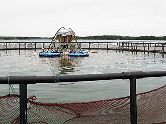 Aquaculture of salmonids - Image: Lachsfarm 1