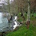Lagoa das Furnas S. Miguel, Açores,Portugal - panoramio (6).jpg