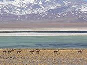 Laguna Santa Rosa.jpg