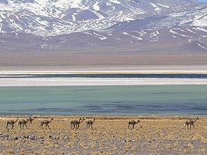 Nevado Tres Cruces National Park - Laguna Santa Rosa