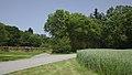 Lainzer Tiergarten (1) IMG 1512.jpg