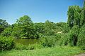 Lake Arnold Arboretum.jpg