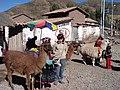 Lamas - panoramio.jpg