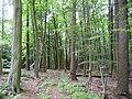 Landschaftsschutzgebiet Horstmanns Holz Melle -Im Wald- Datei 8.jpg