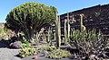 Lanzarote Jardin De Cactus 2019-2.jpg