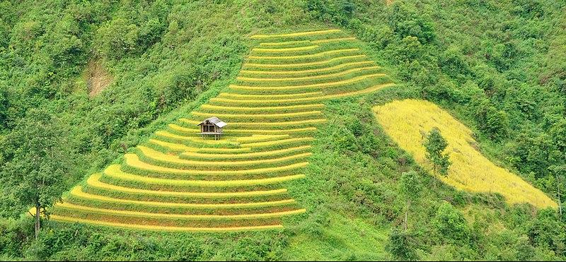Lugares Del Mundo Terrazas De Cultivo En Asia La Labor De