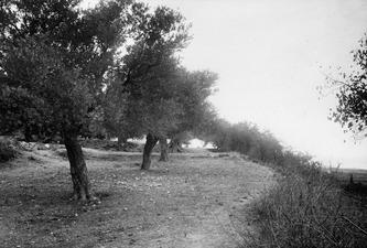 Lapitos. Grävningsplatsen i Ajia Anastasia - SMVK - C00813.tif