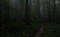 Las bukowy w masywie Jawornika (pasmo graniczne).jpg