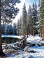 Late Snow in Woods, Yosemite 5-20-15 (19143684379).jpg